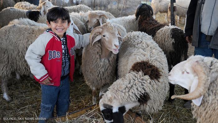 غضب عارم لدى مغاربة مليلية المحتلة بسبب خروف العيد..!