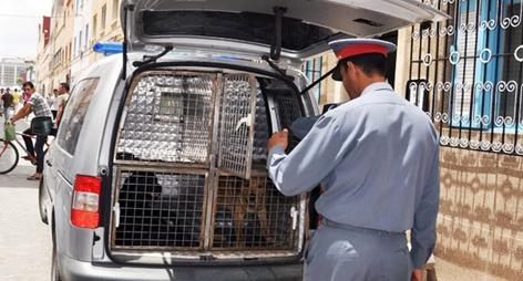 قوات أمنية تقتحم عدة منازل في بن الطيب باستعمال الكلاب البوليسية لهذا السبب؟