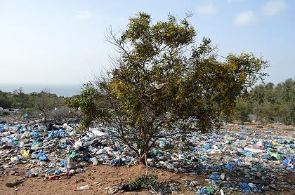 فيديو: غابة ڭوروڭو..رئة الناظور ترزح تحت أطنان من النفايات