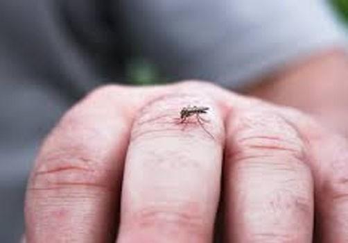 انتشار البعوض بشكل كبير يثير قلق أهالي مدينة الناظور