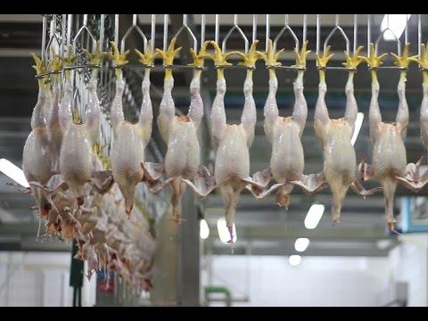 سعر الدجاج يصل 9 دراهم في الأسواق.. والمهنيون يدقون ناقوس الخطر