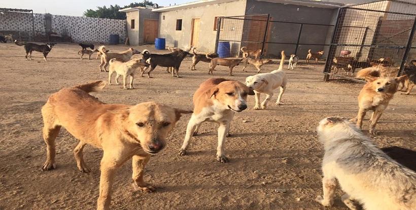 """مواطنون من اركمان:جمعيات الرفق بالحيوانات """"تعرقل"""" عملية قتل الكلاب الضالة التي تهددنا..ونطالب جمعيات حقوق الإنسان بالدفاع عنا"""