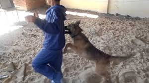 عضة كلب لطفل من – الحراكة – بميناء بني انصار ترسله للمستشفى بالناظور.