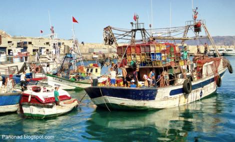 مهنيو الصيد البحري بالحسيمة يطالبون برفع حصة صيد التونة لحماية الاسماك بسواحل الناظور و الريف