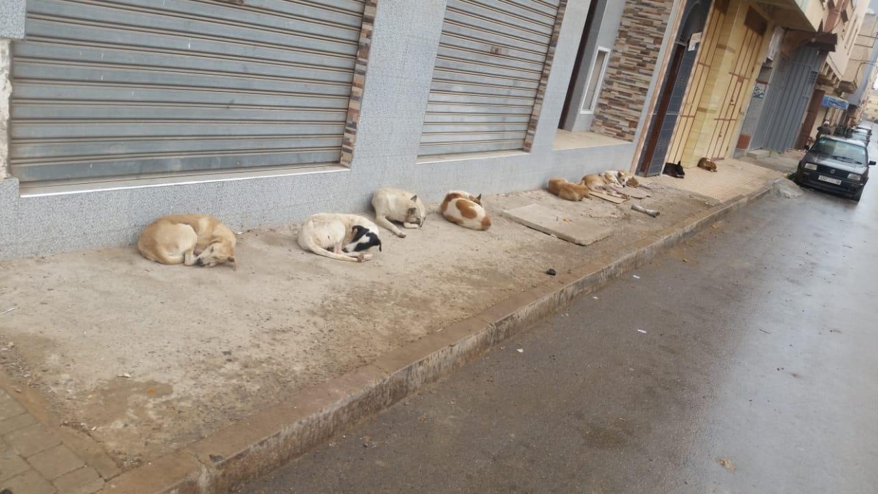 + صورة :معاناة ساكنة مدينة سلوان مع الكلاب الضالة