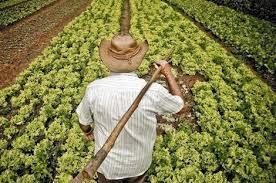 المبيدات الفلاحية المسرطنة تغزو ضيعات وأسواق الناظور..