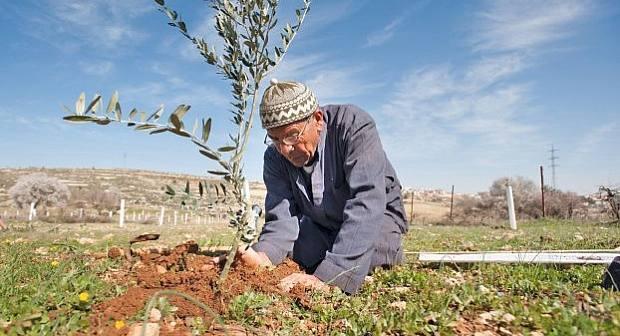 زرع 20 ألف هكتار بمنطقة الدريوش ضمن برنامج تنمية سلسلة الزيتون