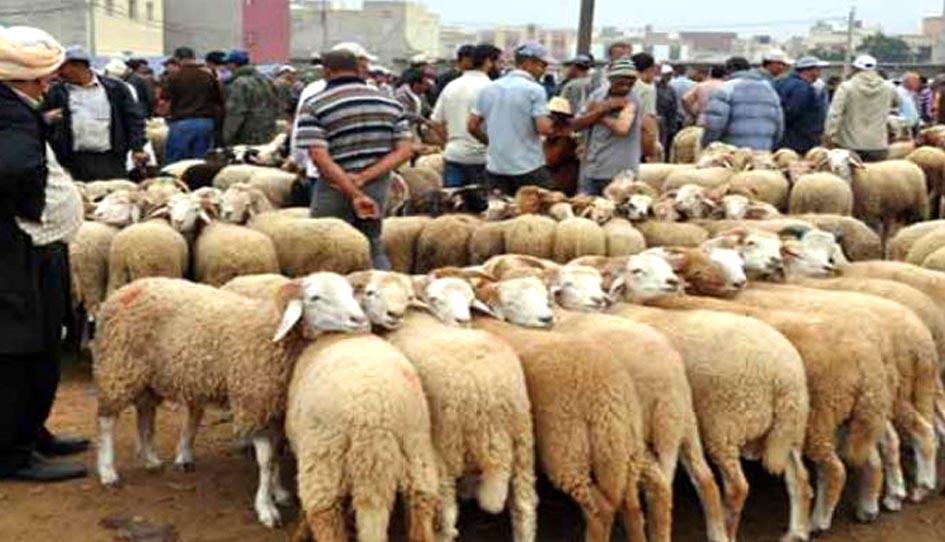 بسبب الحمى القلاعية في المغرب..مليلية تمنع من الآن إدخال الأضاحي من الناظور